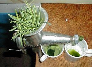 Juice av vetegräs